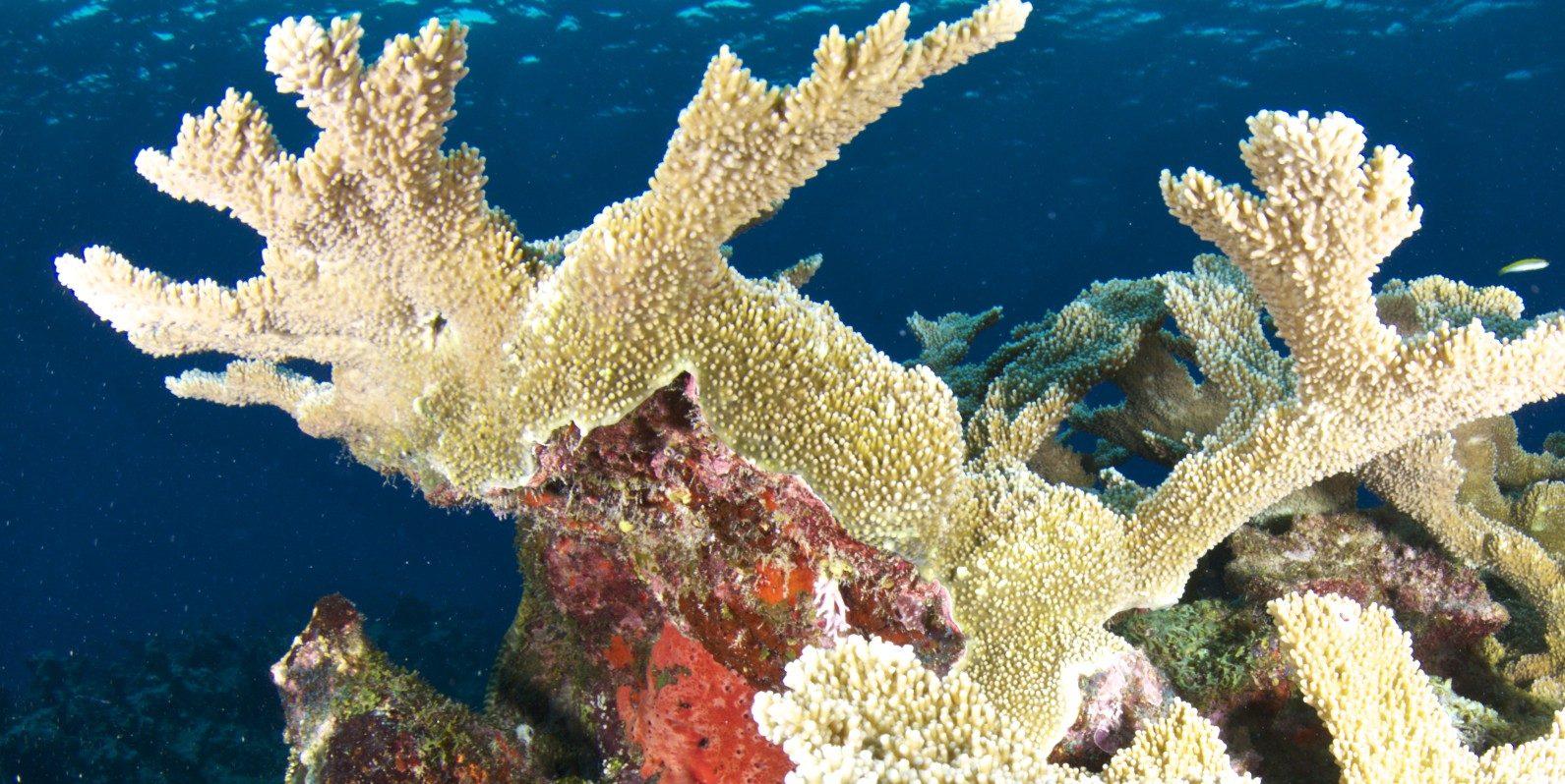 central caribbean marine institute