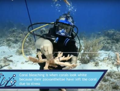 CCMI Reefs Go Live Screengrab